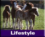 Natural Horse Lifestyle