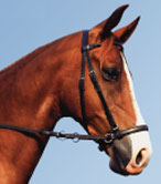 Dr Cook Bitless Bridle