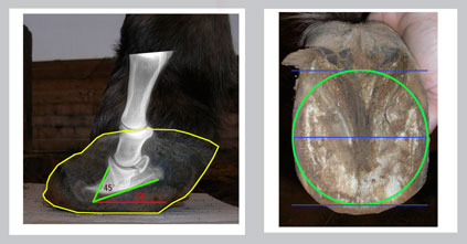 chronic laminitis - Mary