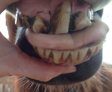Mary's deformed teeth