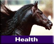Natural Horse Health