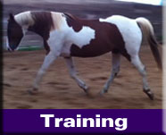 Natural Horse Training