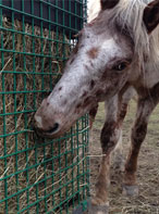 Healthy Horse Feeder