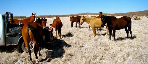 Natural Horse Retirement Program