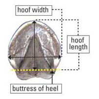 hoof boot measurement