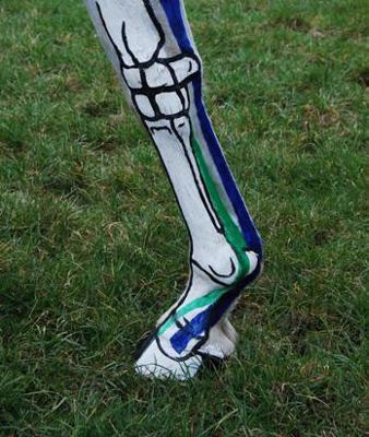 Horse's leg