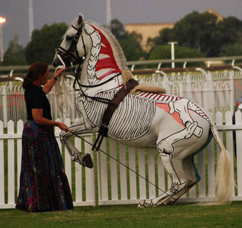 Horse performing Levade