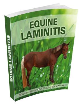 Equine Laminitis Ebook