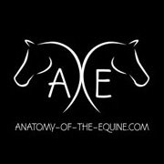Anatomy of the Equine logo